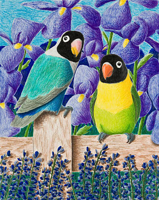 Lovebird Drawing - Black-faced Lovebirds by Jeanette K