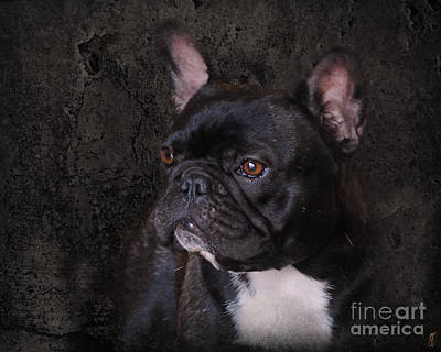 Bulldog Photograph - Black French Bulldog by Jai Johnson