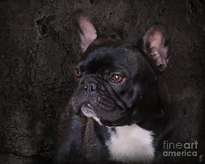 Bulldog Photograph - Black French Bulldog by Jai Johnson