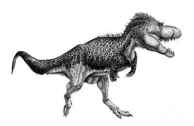 Black Ink Drawing Of Albertosaurus Print by Vladimir Nikolov