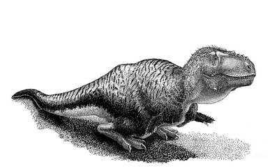 Black Ink Drawing Of Tarbosaurus Bataar Print by Vladimir Nikolov