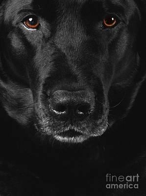 Animals And Earth Photograph - Black Labrador Retriever by Diane Diederich