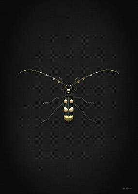 Black Longhorn Beetle With Gold Accents On Black Canvas Print by Serge Averbukh