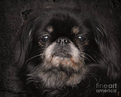 Black Pekingese Print by Jai Johnson