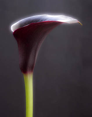 Calla Digital Art - Black And White Purple Flowers Art Work Photography by Artecco Fine Art Photography