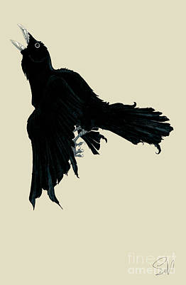 Black Raven Print by Nils Leemans