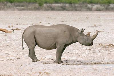 Black Rhinoceros Print by Simon Booth