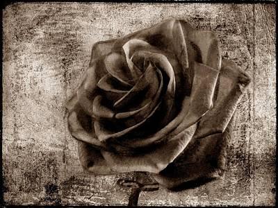 Purple Flowers Digital Art - Black Rose Eternal Sepia  by David Dehner