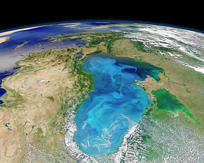 Black Sea Phytoplankton Bloom Print by Nasa/norman Kuring