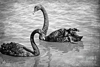 Black Swans - Black And White Textures Print by Carol Groenen