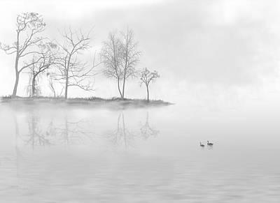 Black Swans Swimming In A Lake Print by Bijan Studio