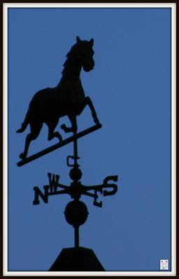 Black Trotter Weathervane Print by Kathy Barney