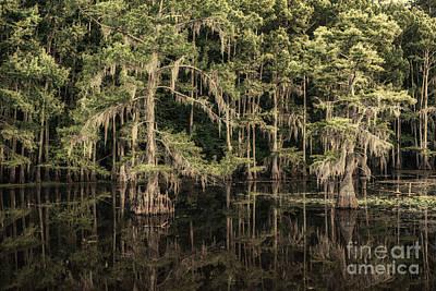 Black Water In Caddo Lake Print by Tamyra Ayles