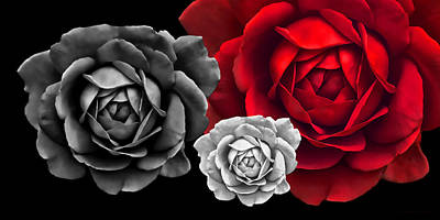 Rose Portrait Photograph - Black White Red Roses Abstract by Jennie Marie Schell