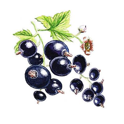 From Nature Painting - Blackcurrant Berries  by Irina Sztukowski
