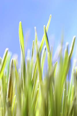 Health Food Photograph - Blades Of Wheatgrass by Cordelia Molloy