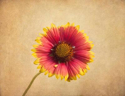 Blanket Flower Print by Kim Hojnacki