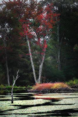 Beaver Photograph - Blazing Beaver Hut by Bill Wakeley
