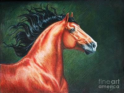 Colored Pencil Painting - Blood Bay Lusitano Stallion by Heidi Carson