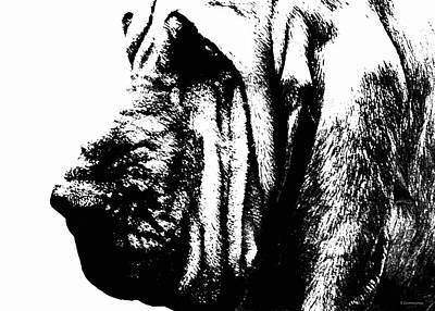 Bloodhound - It's Black And White - By Sharon Cummings Print by Sharon Cummings