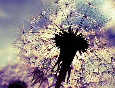 Bloom Original by Ivan Vukelic