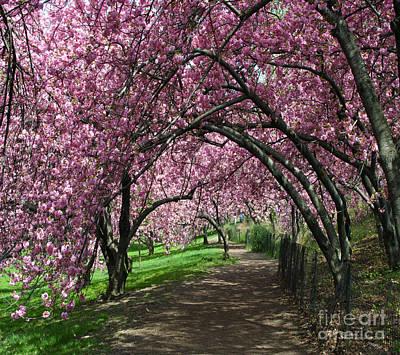 Bloom Walk Cpw Original by Jeffrey Ide