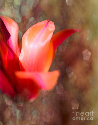 Blooming Digital Art - Blooming Tulip Bokeh by Sonja Quintero