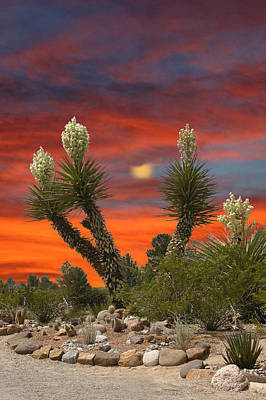 Yucca In Full Bloom Print by Jack Pumphrey