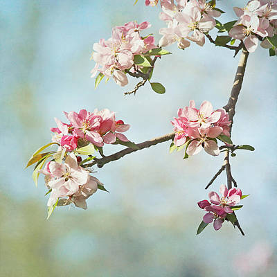 Pink Flower Branch Photograph - Blossom Branch by Kim Hojnacki