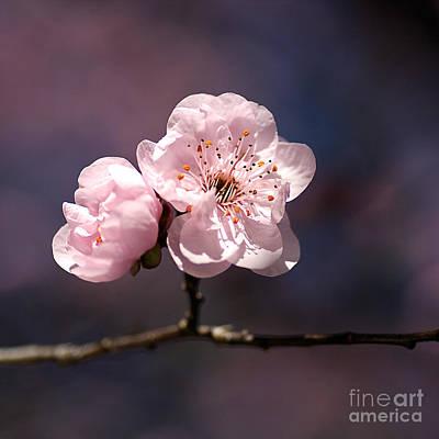 Blossom Print by Joy Watson