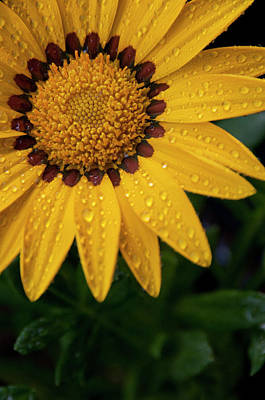 Raindrops On Flowers Photograph - Blossom by Ron White