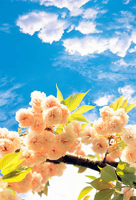 Digital Altered Photograph - Blossoms Against Sky by Panoramic Images