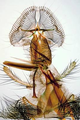 Proboscis Photograph - Blowfly Proboscis by Steve Lowry