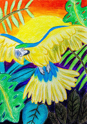 Blue And Red Drawing - Blue And Gold Macaw by Pati Photography