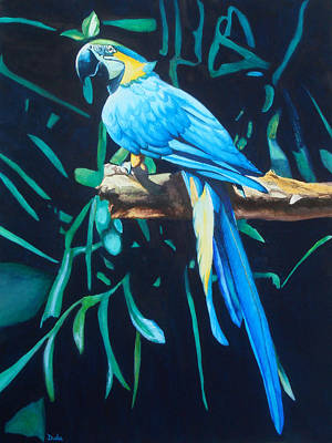 Blue And Gold Macaw Painting - Blue And Gold by Susan Duda
