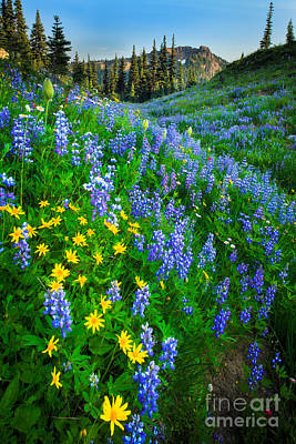 Lupine Photograph - Blue And Yellow Hillside by Inge Johnsson