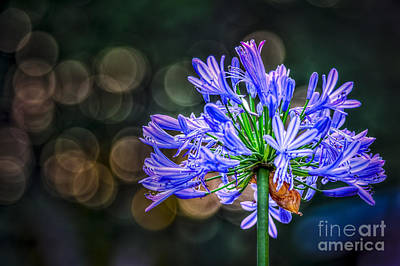 Blue Blooms Print by Marvin Spates