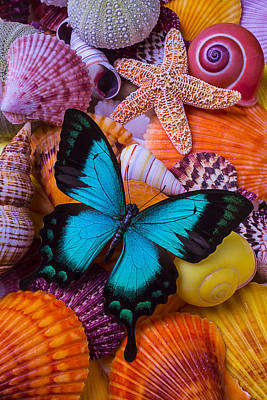 Blue Butterfly Among Sea Shells Print by Garry Gay