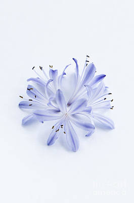 Floral Ring Photograph - Blue Circle by Anne Gilbert