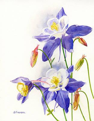 Blue Columbine Blossoms Original by Sharon Freeman