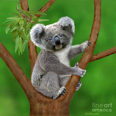 Koala Art Digital Art - Blue-eyed Baby Koala by Glenn Holbrook