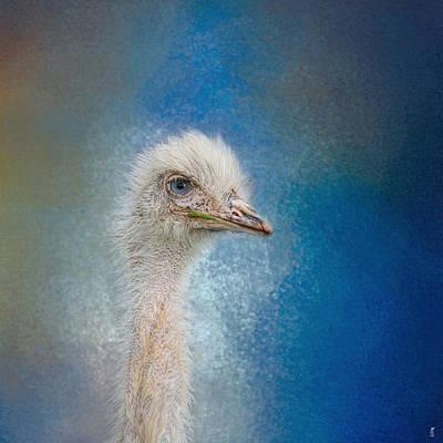 Blue Eyed Beauty - White Ostrich - Wildlife Print by Jai Johnson