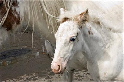 Liz Alderdice Photograph - Blue Eyed Foal by Liz  Alderdice