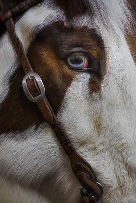 Horse Photograph - Blue Eyes by Susan Candelario