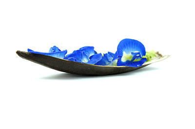 Flourish Photograph - Blue Flower Boat by Aged Pixel