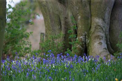 Blue Flowers Blossoming Hirsel Scottish Print by John Short