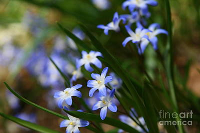 Blue For You Print by Neal  Eslinger