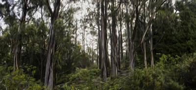 Blue Gum Eucalyptus Forest Print by Brad Scott