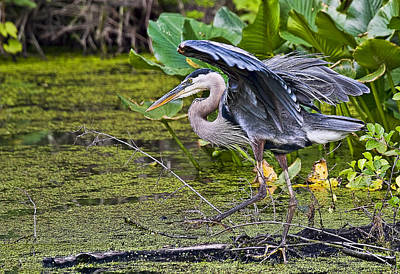Waterfalls Photograph - Blue Heron by Marcia Colelli
