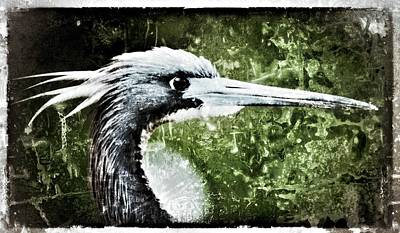 Photograph - Blue Heron by Patty MacInnis